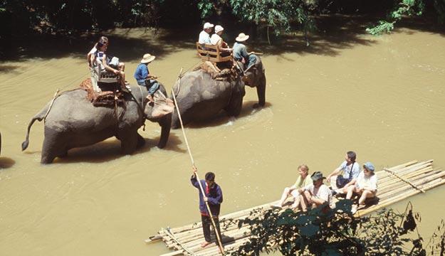 chiangmai-elephant