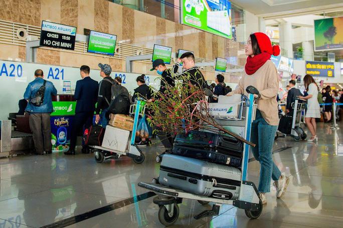 Vận chuyển hoa mai hoa đào trên máy bay Bamboo Airways.